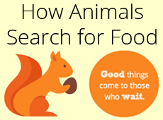 Infographic: How Animals Search for Food