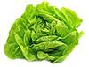 24  dried bibb lettuce leaves