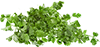 2 Tbsps fresh coriander leaves