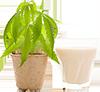 1 cup hemp milk