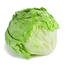 some shredded iceberg lettuce