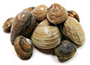 1.8 small littleneck clams