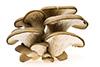7 oz oyster mushrooms