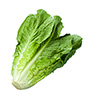 2 bunches romaine hearts