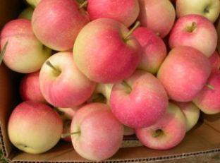 Apple & Sweet Potato Puree Image